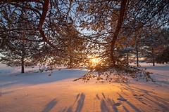 IMG_5490 (Byskan) Tags: winter vinter twilight december sweden resort sverige lightshow havsbad byske ljusspel byskanse byskan