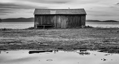 the morning lasted all day (keith midson) Tags: water puddle still pond waterfront seagull shed gordon tasmania boatshed