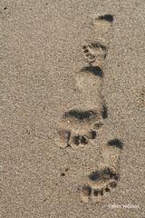 39-070505 Spanien 1 121 (hemingwayfoto) Tags: andalusien fusspur natur reise sand spur strand