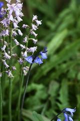 DSC_1134 (PeaTJay) Tags: flowers plants macro nature gardens fauna outdoors reading flora sigma micro closeups berkshire lowerearley nikond750