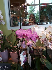 blog27260607896_34f0dd1e02_o (CarverS2) Tags: orchids