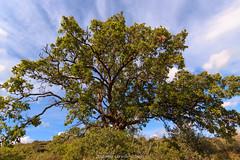 Imponenza (Antonio Ciriello) Tags: italy tree verde green nature clouds canon landscapes italia nuvole natura tokina albero puglia apulia 1116 600d massafra cernera tokina1116 eos600d canoneos600d rebelt3i citignano