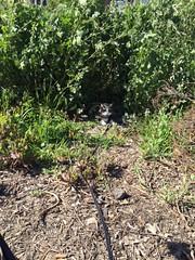 Purrs (Jay Rosenberg) Tags: sanfrancisco art ecology design hayesvalley permaculture urbanpermaculture hayesvalleysf permaculturesf hayesvalleyartworks hayesvallleyartworks 456laguna