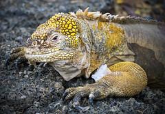 P4253414 (olavagnar) Tags: island islands ecuador do pacific darwin olympus galapagos charlesdarwin pacificocean to equator archipelago 2016 galpagos galapagosislands galpagosislands archipilagodecoln islasgalpagos galpagosnationalpark galpagosmarinereserve