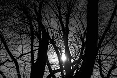WebTree #1 (Javier A Bedrina) Tags: wood old wild blackandwhite plant abstract tree art nature weather silhouette landscape scary branch pattern moody natural outdoor background seasonal decoration shapes botanic conceptual isolated backlighting decoracion bedrina
