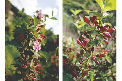 nature&stuff (ConcreteLies) Tags: pink flowers flower green nature beautiful diptych blossom branches
