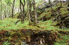 Spot The Wild Goat (strzez wartosci) Tags: film analog forest scotland highlands minolta hiking rangefinder trail westhighlandway minoltahimatic