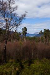 Slight view at Loch Lomond (Paul-Ob) Tags: forest scotland spring cloudy loch lomond