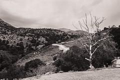 Crte - l'arbre mort (Julien Pf) Tags: canon landscape eos rebel arbres crete 1855mm t3 try paysage arbre grce paysages landscpaes crte 1100d