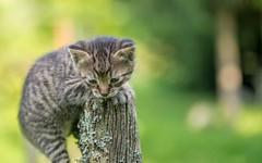 kittens (07) (Vlado Fereni) Tags: cats animals kitty croatia kittens catsdogs animalplanet hrvatska hrvatskozagorje zagorje tamron9028macro nikond600