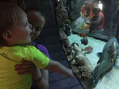 "Paul and Mommy at the Dallas Aquarium • <a style=""font-size:0.8em;"" href=""http://www.flickr.com/photos/109120354@N07/27244274844/"" target=""_blank"">View on Flickr</a>"