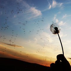 Wishes In The Wind (Marek Kalich) Tags: sunset sky flower nature clouds outdoors fly colorful sundown blow dandelion explore wander