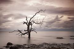 (briyen) Tags: tree long exposure icm palawan 2016