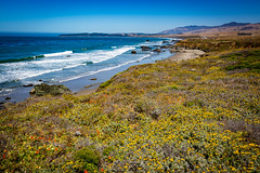 7P7A2633 (Mark Ritter) Tags: ocean flowers water landscape coast highway rocks pacific pch