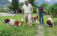 Sen-Bernar (welenna) Tags: senbernar bernhardiner animals tiere dog dogs hund hunde people leute