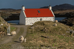 Scotland Set Five - 4 (burntpixel.ca) Tags: uk trip travel red sunlight white house green art beautiful horizontal rural spectacular landscape scotland photo europe sheep britain united fine cottage patrick kingdom adventure photograph journey western barra wander hebrides overseas mcneill burntpixel wrench777