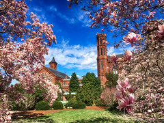 Magnolia Blossoms at the Smithsonian Castle (` Toshio ') Tags: flowers castle clouds washingtondc smithsonian dc washington nationalpark spring districtofcolumbia blossoms bloom iphone smithsoniancastle toshio magnoliatrees