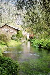 Torrente (sz1507) Tags: verde primavera nature garden spring natura acqua ruscello piante calma paesaggio giardino ninfa d60 torrente vegetazione nikond60 giardinidininfa