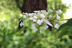 IMG_1444 (ShellyS) Tags: nyc newyorkcity flowers manhattan parks unionsquare unionsquarepark