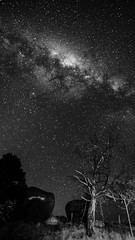 Milky way in B&W (Indigo Skies Photography) Tags: camera pink blue trees winter light red sky blackandwhite orange white black flower tree green art nature water yellow stone night rural lens stars landscape flora farm australia wideangle victoria galaxy universe milkyway wideanglelens tokina1116mmf28 nikond7000