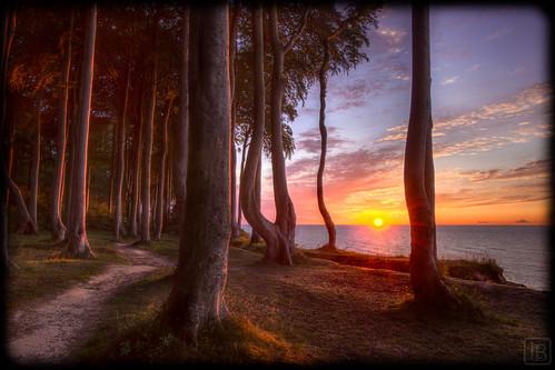 Sonnenuntegang Küstenwald Heiligendamm