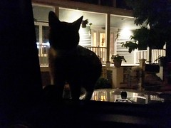 Random Photos! - Somebody's Impatient! LOL (Polterguy30) Tags: cats silhouette night cat funny random silhouettes kitty nighttime