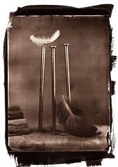 Fallen (Nagy Krisztian) Tags: vandyke collodion negative 18x24cm brown plume