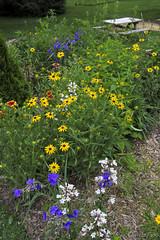 My Native Garden (JBtheExplorer) Tags: native garden habitat restoration prairie pollinator monarch butterfly bees penstemon digitalis rudbeckia hirta blackeyedsusan gaillardia blanketflower spiderwort wisconsin