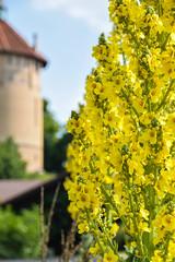 Yellow (Maria Eklind) Tags: park city summer flower nature se photo skne sweden outdoor sverige vernissage malm yeloow pildammsparken skneln pildammstornet