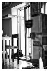 black cat (Alja Ani Tuna) Tags: blackandwhite bw white black reflection window cat table nikon day year kitty years nikkor dailyphoto d800 85mmf18 project365 personalproject nikkor85mm 11365 photo365 onephotoaday nikond800 catcaffe