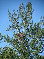 JetBoat12 (alicia.garbelman) Tags: birds alaska boats talkeetna eagles nests mahaysjetboat
