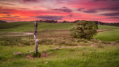 Afterglow on the Cat and Fiddle (MyWorldThroughMyLens) Tags: sunset red england sky tree field grass wall clouds landscape countryside glow post unitedkingdom windy gb grassland drystone lowsun afterglow highpeakdistrict