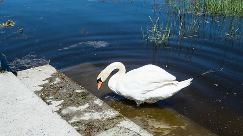 2016-06-20-144842_Arbon_Am Bodensee