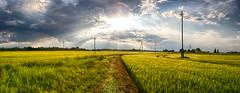 PANO1_hdr (i0wa) Tags: sunset summer nature rain estonia canon2470f28l harju canoneos40d canonspeedlite580exii peningi
