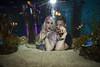 A Night At The AQUEERium, Pride 2016, Toronto, Canada (DawnOne) Tags: gay costumes party copyright fish toronto canada men water animals glitter bar night lesbian fun dawn aquarium women jellyfish dj stingray australian ripleys makeup kitty pride bodypaint event linda lgbt mermaids virago sharks judy trans lesbians facepaint superstar hammond stilts transsexual sapphire reign gays 2016 mermen lgbtq titha indyfoto aqueerium