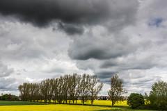 Kalter Frhling (AxelN) Tags: deutschland wolken grau dunkel herrenberg rapsfeld badenwrttemberg baumreihe bedeckterhimmel