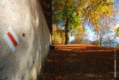 #009 Cima Pianca (Enrico Boggia | Photography) Tags: bosco malcantone montelema novaggio cimapianca enricoboggia