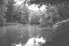 June 16, 1965 (J.PerkProductions) Tags: park wild green nature leaves outdoors photographer photos baltimore photographs 24mm14 newphotos 85mm18 100mm28macro parktrails jeffreyperkins jperkproductions