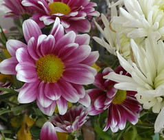 Pink and White (MajiksBox) Tags: pink flowers closeup masterphotos wonderfulworldofflowers lovelyflickr