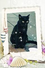 oh, isn't she just precious! (meowtasticparadise) Tags: black cat blackcat feline adorable precious aww neko mylove catpic flickrandroidapp:filter=none