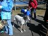 LakeQuanapowitt2-26-2012013