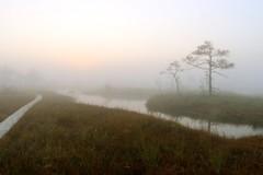 IMG_0554 (reesus) Tags: tree fog sunrise bog puu udu raba kakerdaja pikesetus