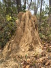 Termites nest (niramay joshi) Tags: insect nest sony cybershot dsc termite s3000 niramay dscs3000 niramayjoshi