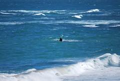 whale watching (Jellibat) Tags: beach path walk australia victoria coastal promenade whales greatoceanroad whalewatching warrnambool logansbeach shipwreckcoast