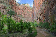 Zion National Park - 171 (simpsongls) Tags: trees utah sandstone stream solitude outdoor hiking rocky cliffs valley rivers zion nationalparks canyons virginriver