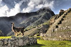 Machu Picchu Ciudad de  Encantos