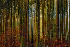 Autumn Woodland (pollylew) Tags: november autumn trees abstract incamera woodlandfloor