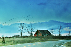 Abandoned (gabi-h) Tags: november autumn ontario abandoned birds flock redhouse milford princeedwardcounty gabih