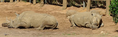 PK3-0881 (iTrax) Tags: macro zoo dc pentax c sigma australia perth western 1770 k3 284 hsm