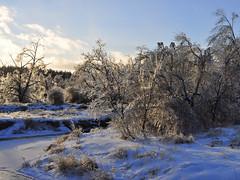 (KoVladimir) Tags: winter snow canada landscape nikon d5000